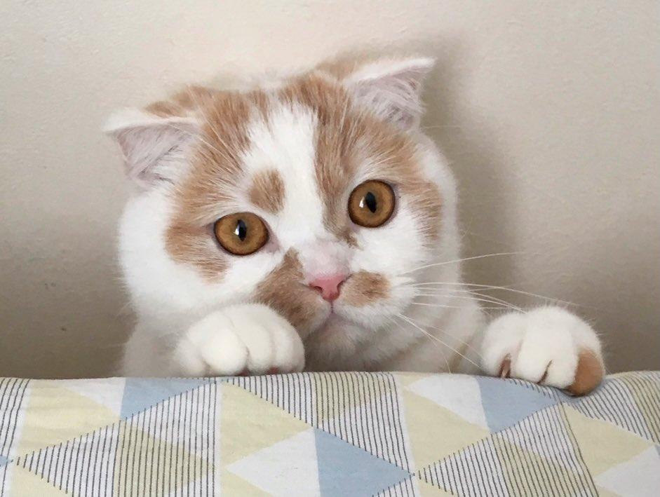 アイコン写真の別ショットが(´・ω・`)←この顔でした