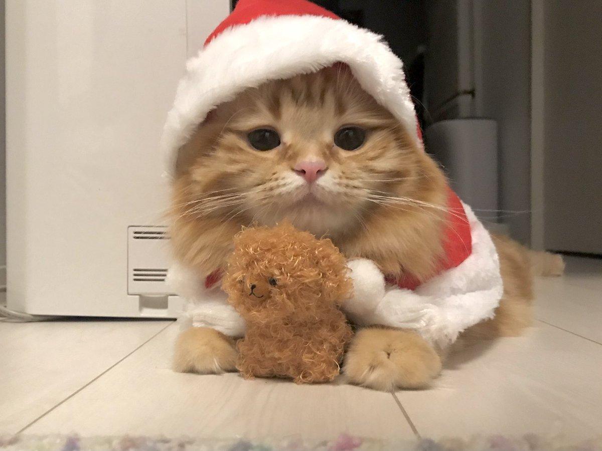 12月🎅🏻ちくわさんた今年も来るかな〜☺️☺️☺️