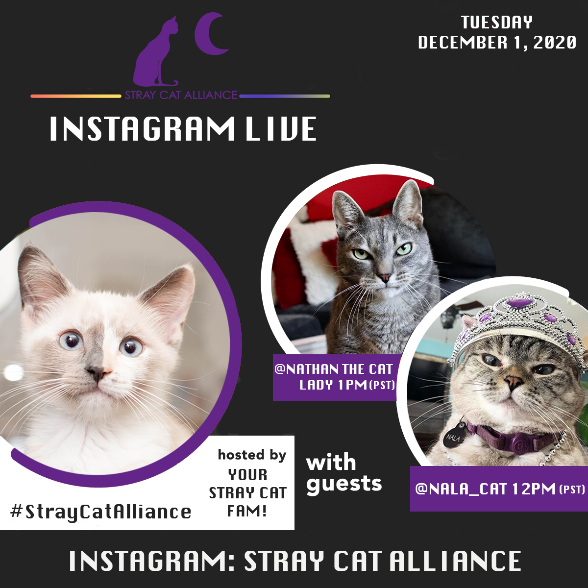 Join us LIVE tomorrow, Tuesday, December 1, for @GIVINGTUESDAY! 😻  We have a lot of fun things planned, and we would love 💜 for you to join us throughout the day! We will be going LIVE with @iamnalacat and @NathantheCL!  Donate early:  #givingtuesday