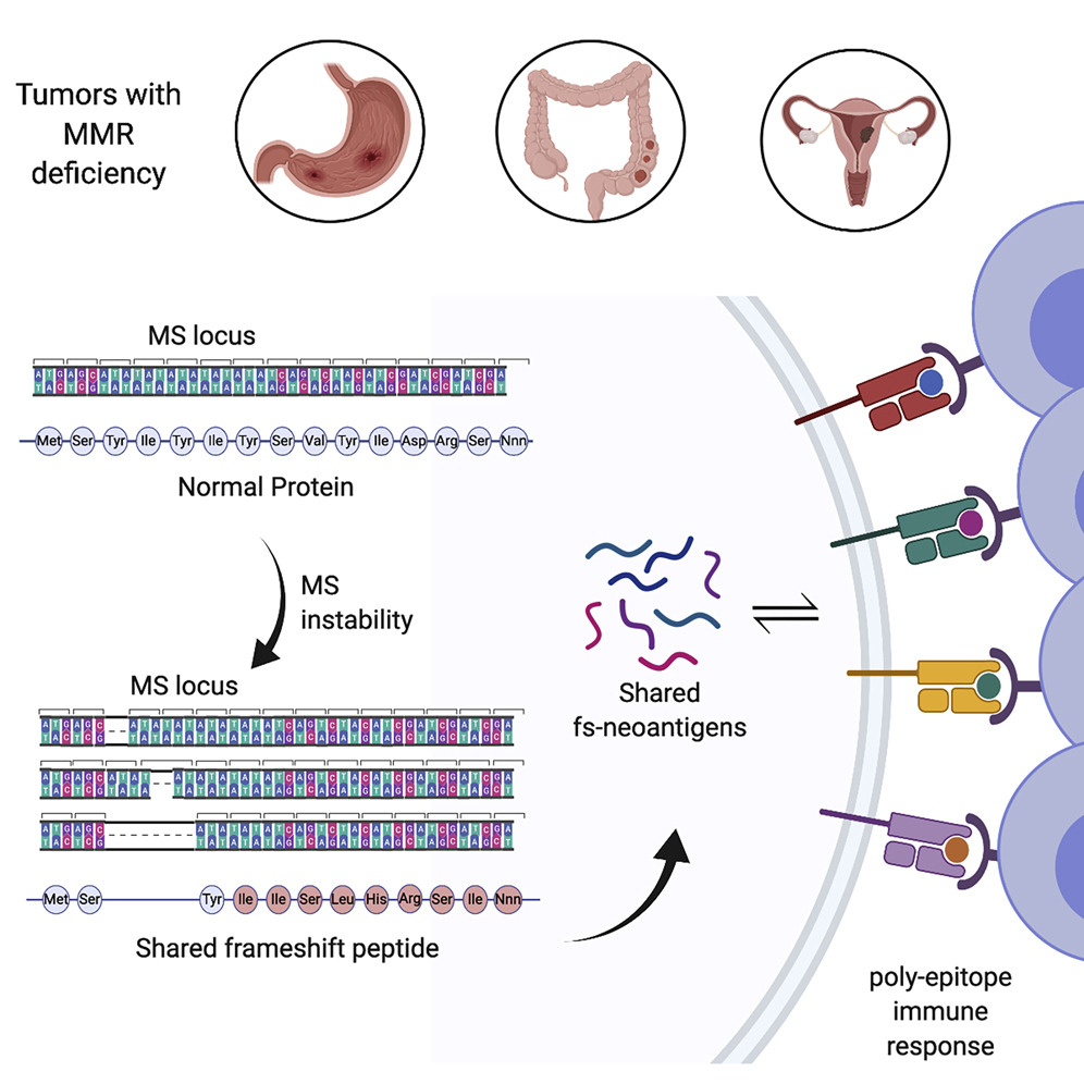 #Tumors that have high levels of #mutations within #microsatellites demonstrate specific frameshifts that yield #neoantigens distinct from both self and #viral #antigens. Online now! https://t.co/L3BfSgvRuX https://t.co/tKRxfcpege