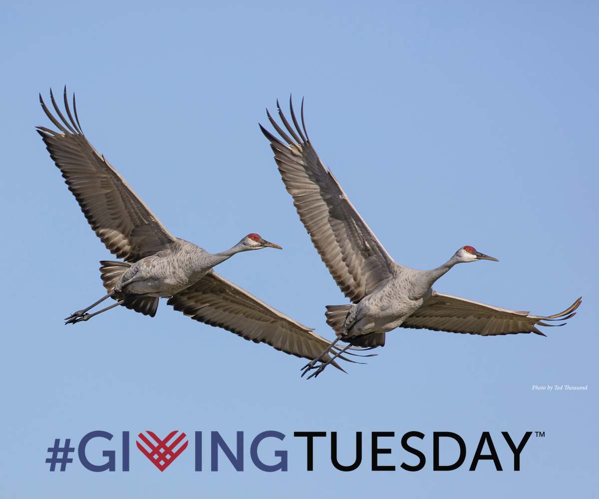 This #GivingTuesday we give thanks for your continued support of our mission. Due to your generosity, we continue to carry out our worldwide efforts to save cranes and places they dance. AND  every dollar of your gift is doubled up to our $35,000 goal: