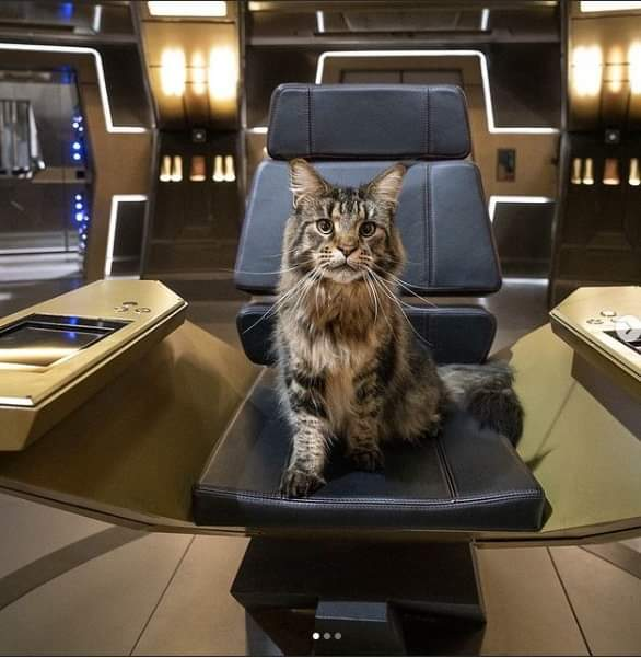 Her Most Imperial Majesty, Mother of the Fatherland, Overlord of Vulcan, Dominus of Qo'noS, Regina Andor, Grudge the Cat