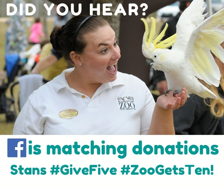 Tomorrow....Tuesday, Dec 1. #GivingTuesday #GivingZooday #Take5toGive5