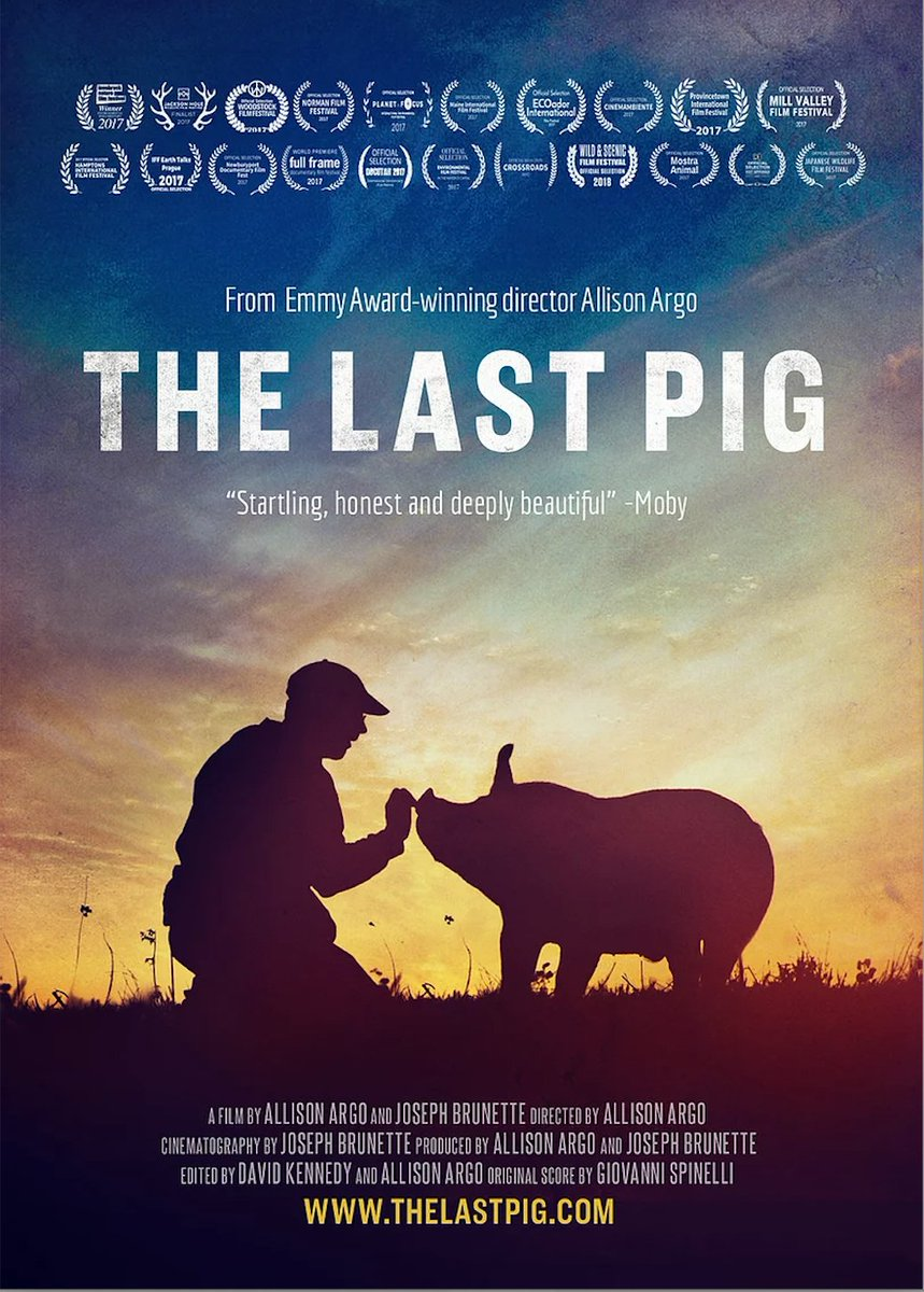 🐽 Join us on December 4 at 7 PM EST for a live panel discussion featuring @TheLastPigFilm director Allison Argo!   Register for the live panel discussion HERE ⬇️ https://t.co/xNaC8lGWVf  #pigs #animals #vegan https://t.co/sBDYK4z4tv