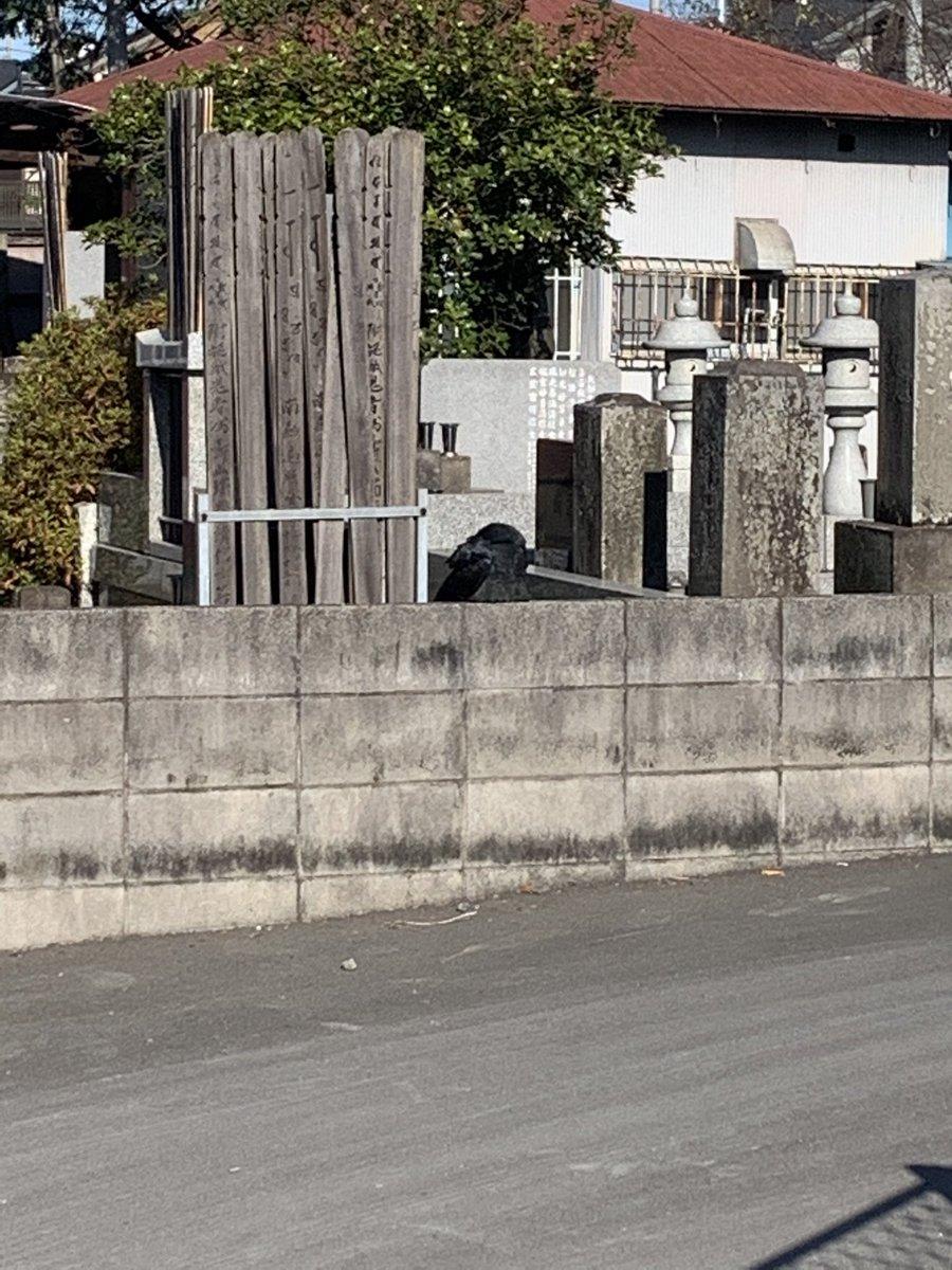 ゴミ捨てに出て、塀の上に黒猫がいるな〜…と近づいたら烏だこれ(熟睡してる…)