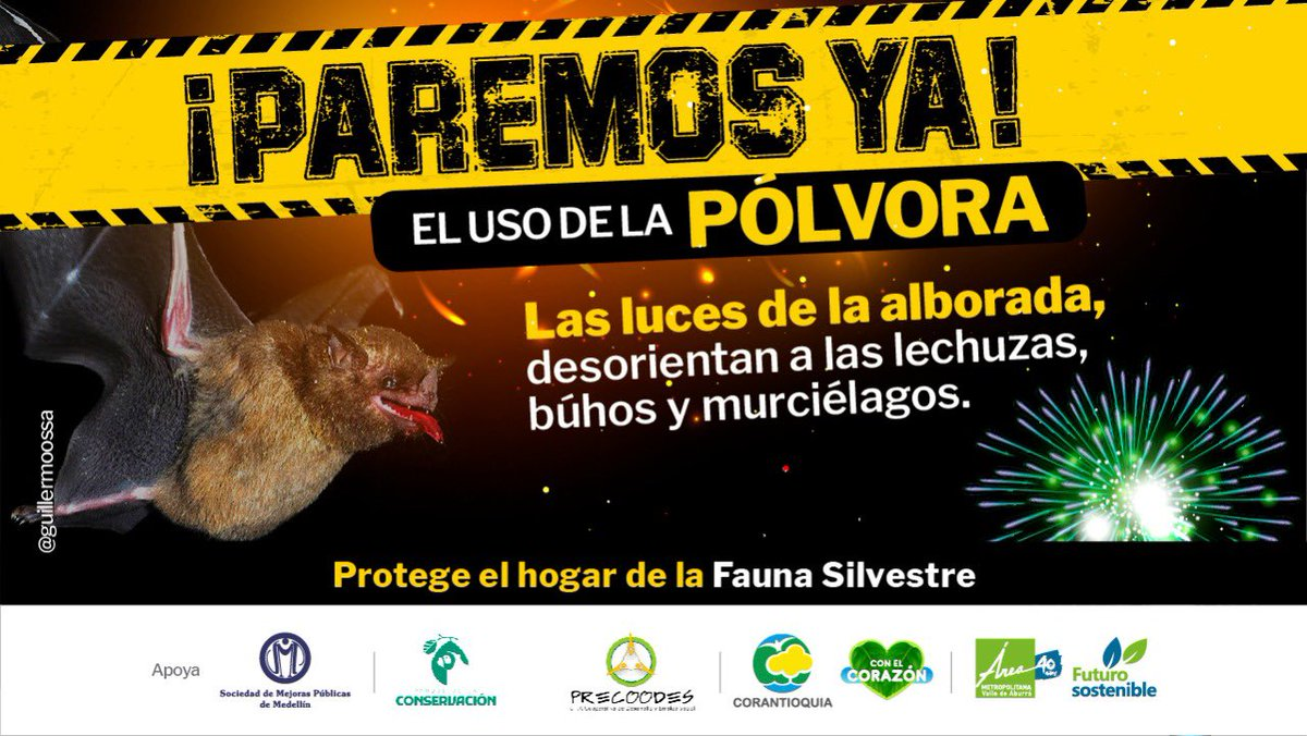 Los estallidos de la pólvora 💥desorientan a las lechuzas, búhos 🦉 y murciélagos 🦇. #ParemosYa el uso de pólvora, protege el hogar 🌳 de la fauna silvestre 🦜🐒🦜. ¡Por favor no apoyes la alborada! https://t.co/H3hmTdYkw9