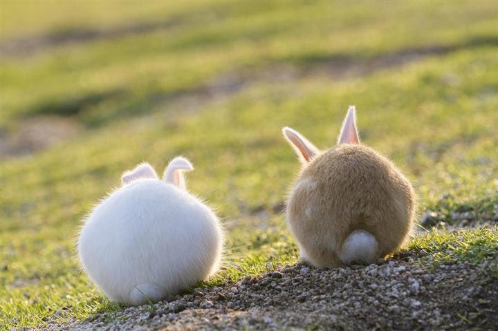 ウサギさんの後ろ姿見て癒されましょう🐰