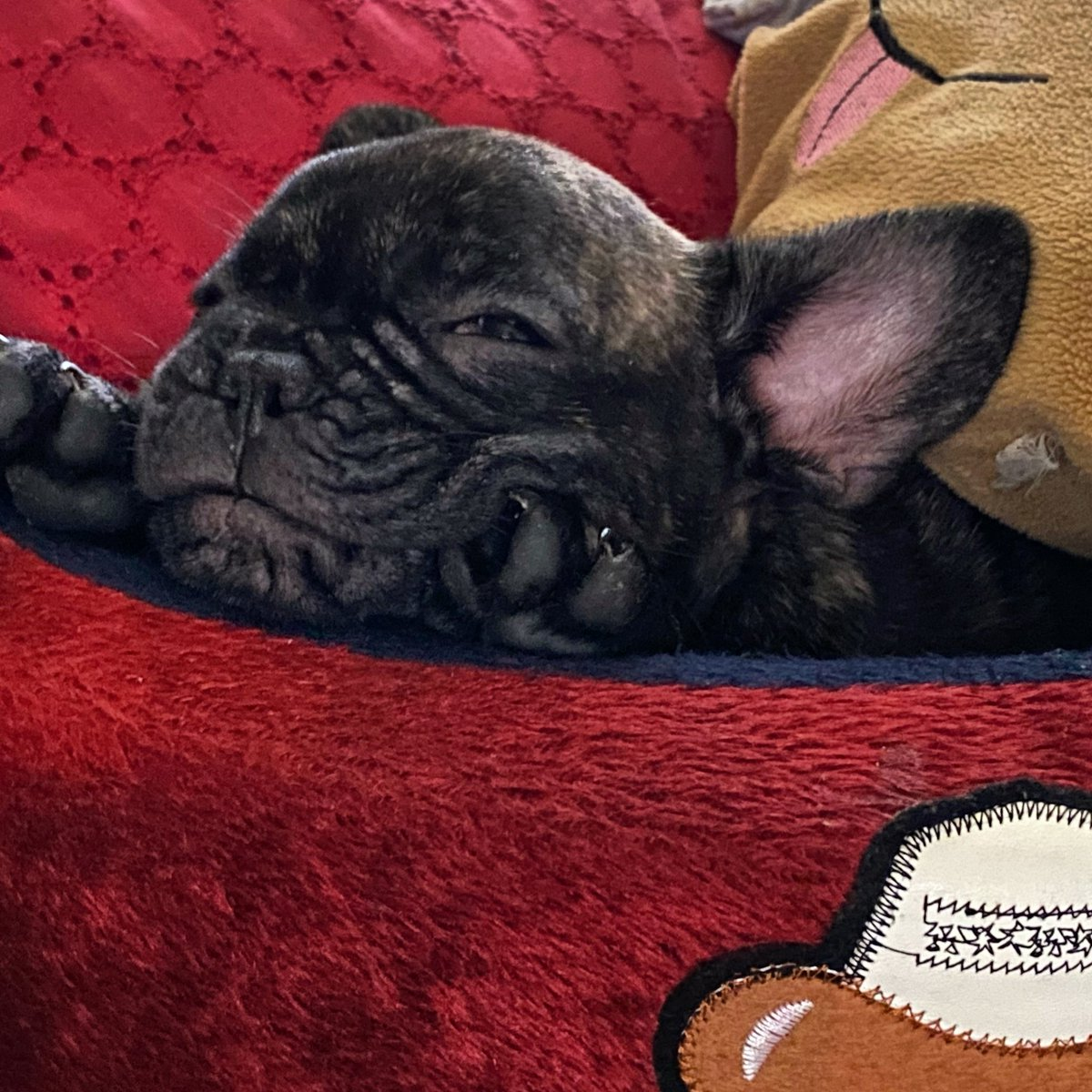 Lazy Morning 😴❤️🐶 #sleepypuppy #sleepy #marvel  #goodmorning #goodvibes #photography #petphotography #lovephotography #lovepuppies #animalpgotography #photographylovers #hobbyphotography #hobby #shots #shotoniphone #iphonography #shotoniphone11pro #beautifulphotography https://t.co/DTSqloJRxS
