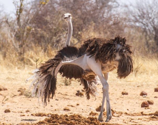 Hello December! Let us dance through this year's silly season.  Bird life in The Etosha National Park by Ute Von Ludwiger.   @MusharaSafari  #sillyseason #holidayinnamibia #namibisafari #explorenamibia  #ExploreLocal #GrowNamibia #TravelNamibia  #namibiaholiday #festivevibes