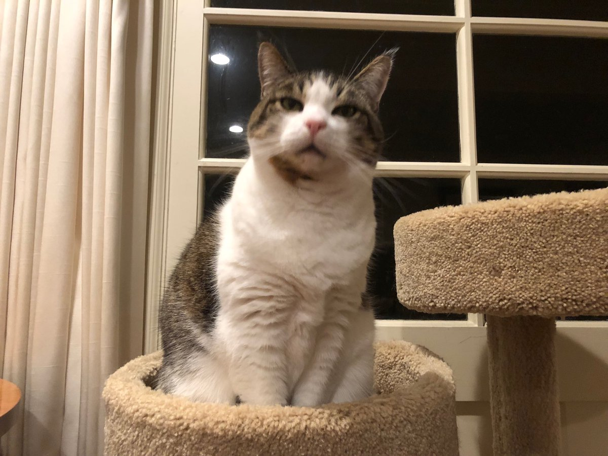 If there's one thing that all dogs agree on, it's that the Earth is flat. #CatsOfTwitter