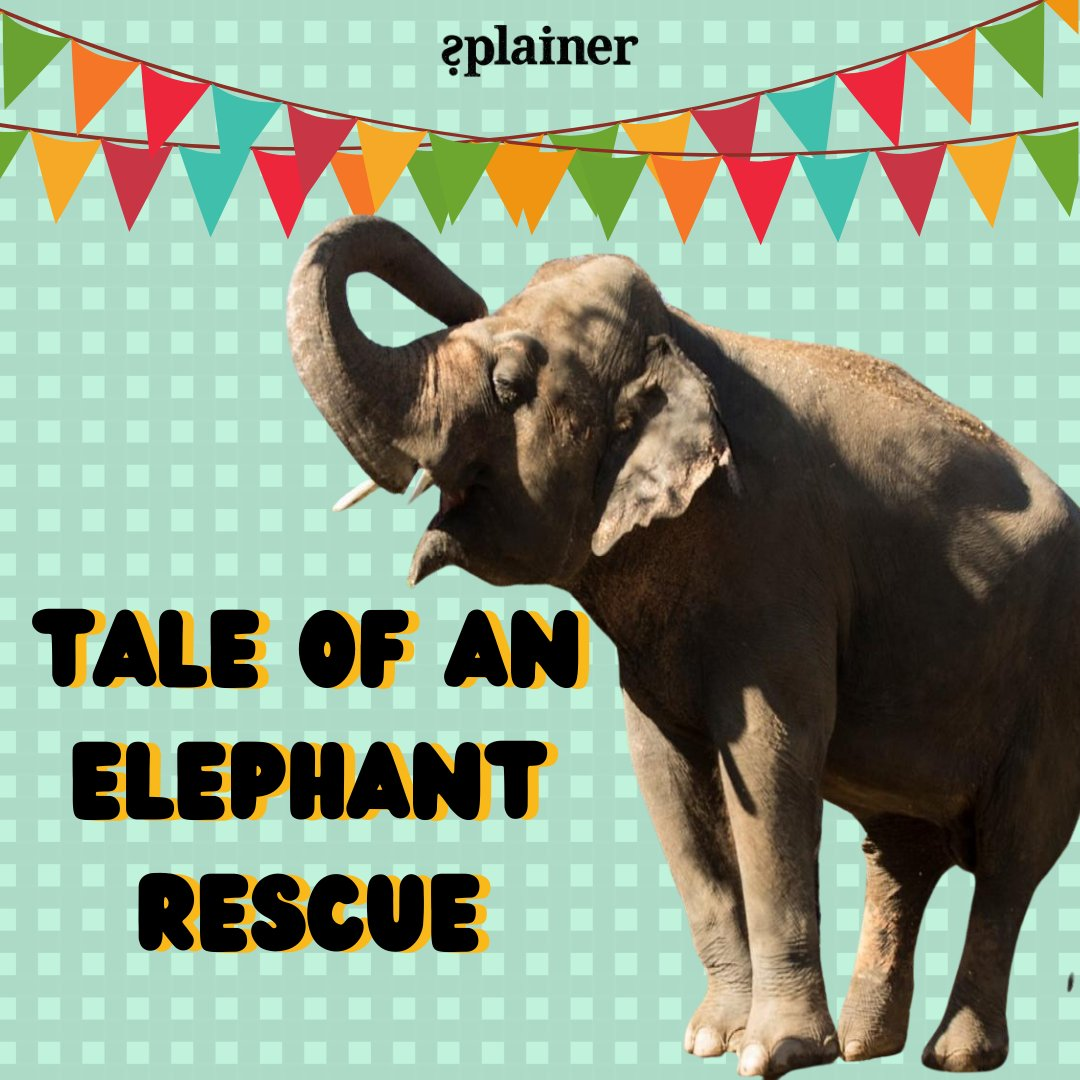 For more #HeadlinesThatMatter from around the world, read today's edition!     #splainer #subscribe #kaavan #cher #pakistan #elephant #rescued #HaathiMereSaathi