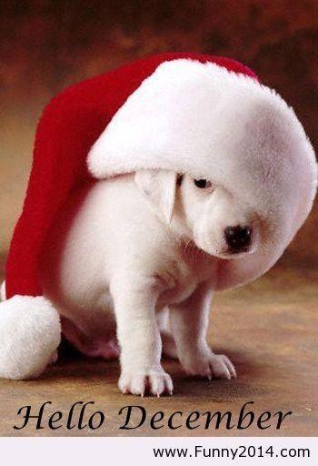 Καλό μήνα με υγεία για όλους μας!!❤️❤️ Να ειμαστε όλοι καλά, τα ζωάκια μας, τα αδεσποτακια μας!!❤️❤️ Η μεγαλύτερη ευχή μου θα είναι πάντα για τα αδεσποτακια, όλα να έχουν σπιτάκια γεμάτα αγάπη και φροντίδα!! ❤️❤️ Υιοθετουμε δεν αγοράζουμε! #AdoptDontShop #savestrays #December