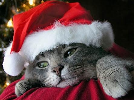 As it's the 1st of #December I thought I would post a picture of the #Christmas #lockdown #kitty #Cat.  It's officially time to start getting #festive, even under lockdown.  #christmasdecor #christmasiscoming #christmas2020 #festivevibes #festiveseason.