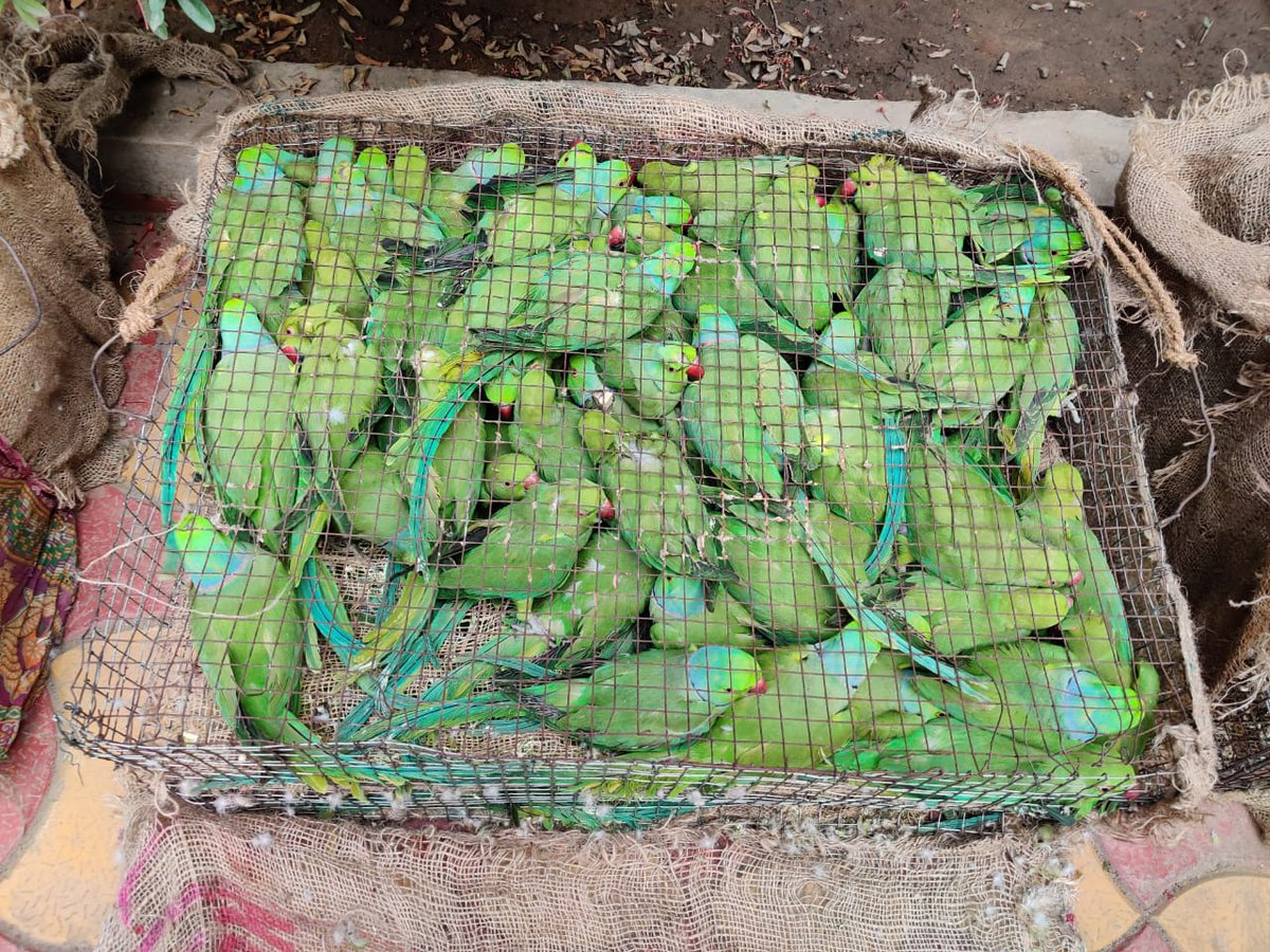Another seizure of 300 no. Parakeets & 15 Hill Mynah coming from neighbouring State at NH2 in Durgapur today by our team. Kudos to them. They shall have wings and  Sky to fly. @ParveenKaswan @Saket_Badola @ErikSolheim @HOD @rameshpandeyifs @CentralIfs