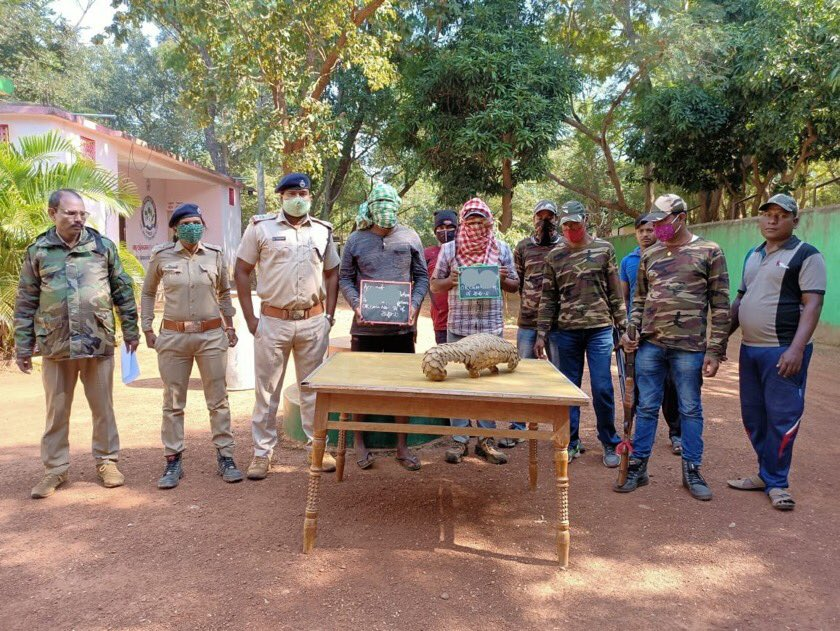 Another pangolin seizure in Odisha by team @DfoDhenkanal. Good work but the pressure on the species in general continues. Awareness can help in fighting against crime related to wildlife.