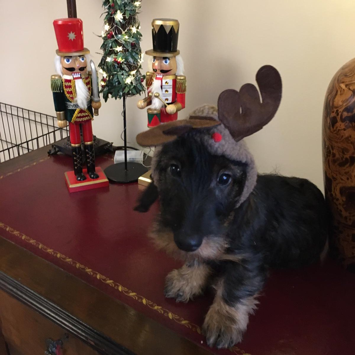 Little BigPaw Head Office has gone all out Christmas, share pictures of your festive pets all dressed up and ready for Christmas and we will feature them on our Website homepage   #christmas2020 #festivevibes #welovechristmas