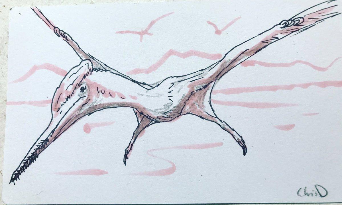 #Drawdinovember days 27-30 is Ctenochasma, Teleocrater, Desmatosuchus, and Spinosaurus. #paleoart #sketch #drawdinovember2020 #Dinovember2020