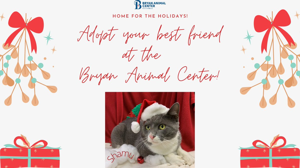 We have lots of animals awaiting a home for the holidays! Adopt a furry friend and help us get all of our animals a home for the holidays! #Adopt #CityofBryan #homefortheholidays #homeforchristmas #Bryananimalcenter #Holidays #furryfriends #bestfriends