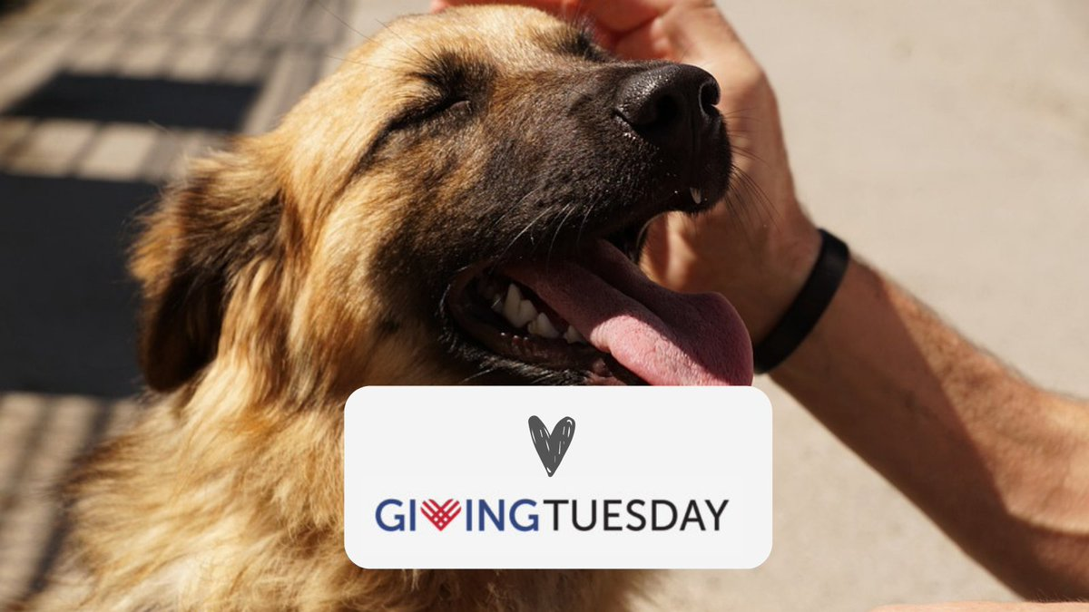 TODAY #GivingTuesdayCA ! There's no better way to celebrate the season than to give back to those in need. With your support, we can continue to grow our programs such as our pet food bank, public veterinary services and urgent foster program.