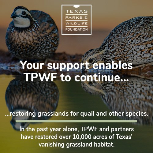 #GivingTuesday: When you choose to support the wild things and wild places of Texas you allow us to continue restoring grasslands for quail and other species across the state. We depend on you to continue this great work. Consider supporting TPWF today.