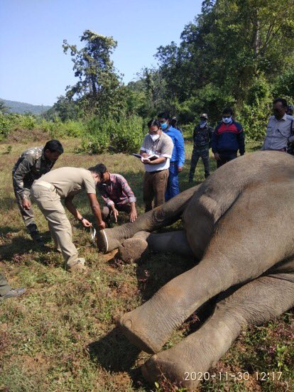 Not everyday ends with good news. Challenges are there in conservation. One elephant got electrocuted in Sambalpur Odisha and one fell down in Deogarh, Jharkhand. Efforts are on to save fallen elephant by the team Deogarh. #elephant  PC-@DfoSambalpur @DeogarhDfo
