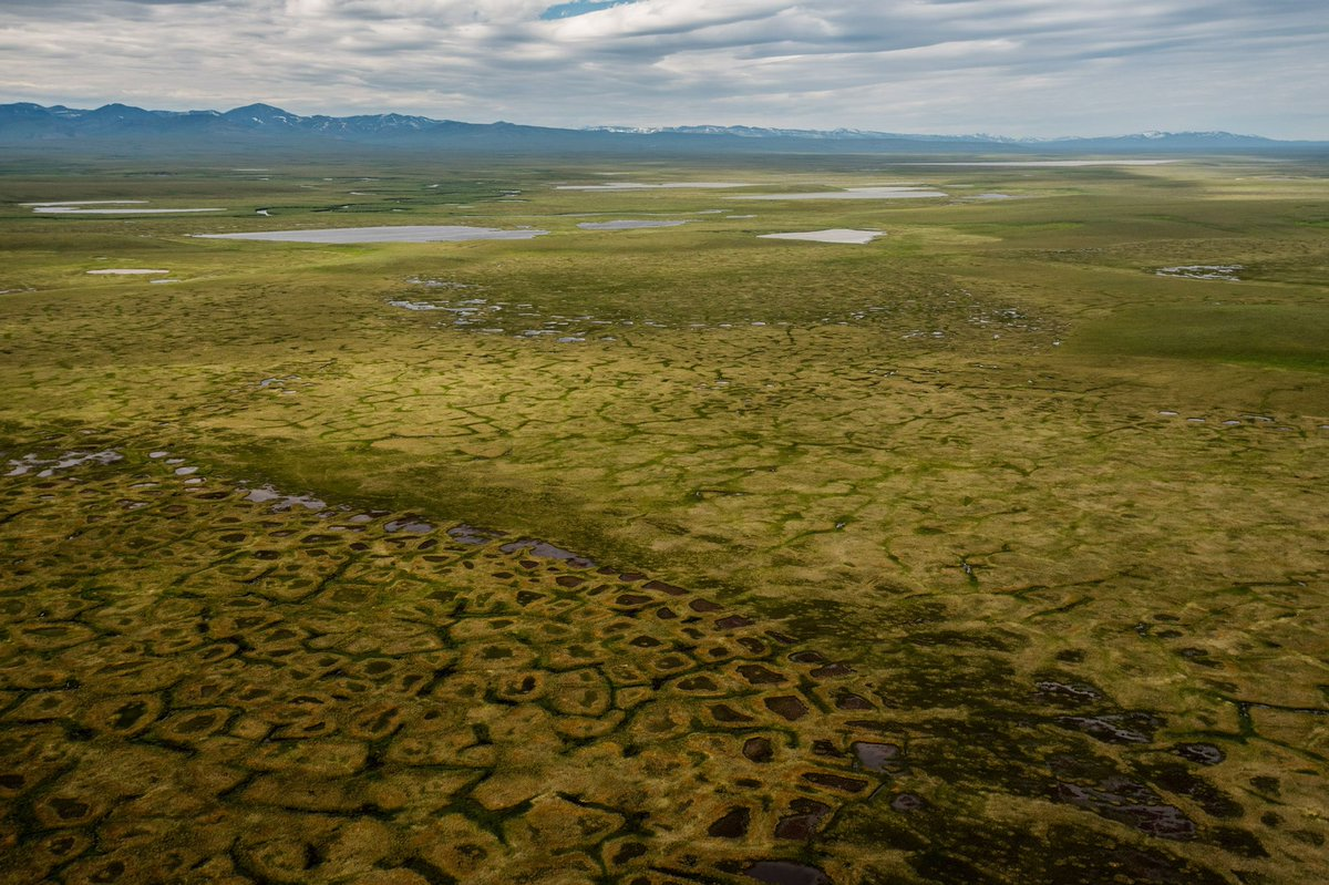 The Arctic is getting greener, parts averaged up to +14 °C above normal in November  This prevents the permafrost staying frozen permanently, thus releasing large amounts of trapped methane: A third of the carbon stored in our soils is in that permafrost