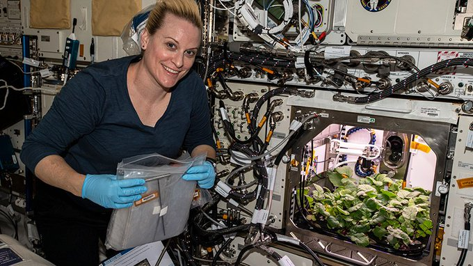 NASA astronaut and Expedition 64 Flight Engineer Kate Rubins checks out radish plants growing for the Plant Habitat-02 experiment that seeks to optimize plant growth in the unique environment of space and evaluate nutrition and taste of the plants.