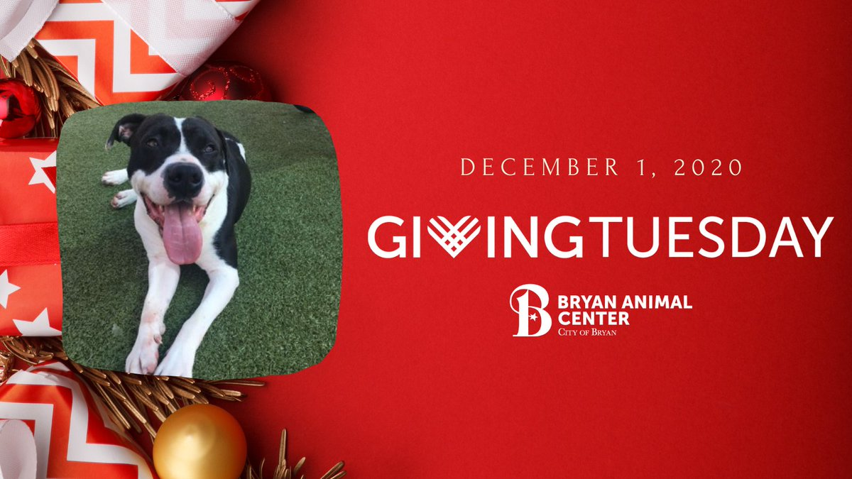 Jerry says that today is #GivingTuesday! 🎁🎉 Will you make a donation to help support dogs like Jerry, who has been in our care for 310 days!? You can make a donation today at  #GivingTuesday #BetterInBryan #adopt #CityofBryan #homefortheholidays