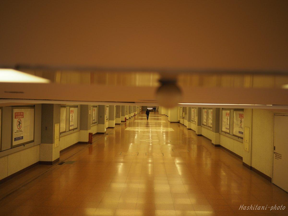 天井から    #写真好きな人と繋がりたい #ファインダー越しの私の世界 #写真で奏でる私の世界 #キリトリセカイ #ミーナphoto部  #tokyocameraclub #東京カメラ部 https://t.co/AppYEYtwBI