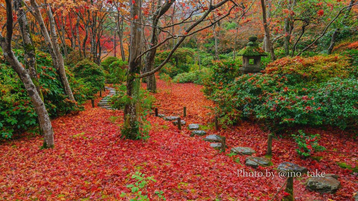 大河内山荘庭園  2020.11.20 撮影 SONY Alpha #大河内山荘庭園 #紅葉 #京都  #そうだ京都行こう  #写真好きな人と繋がりたい https://t.co/yg2xyQcxWS