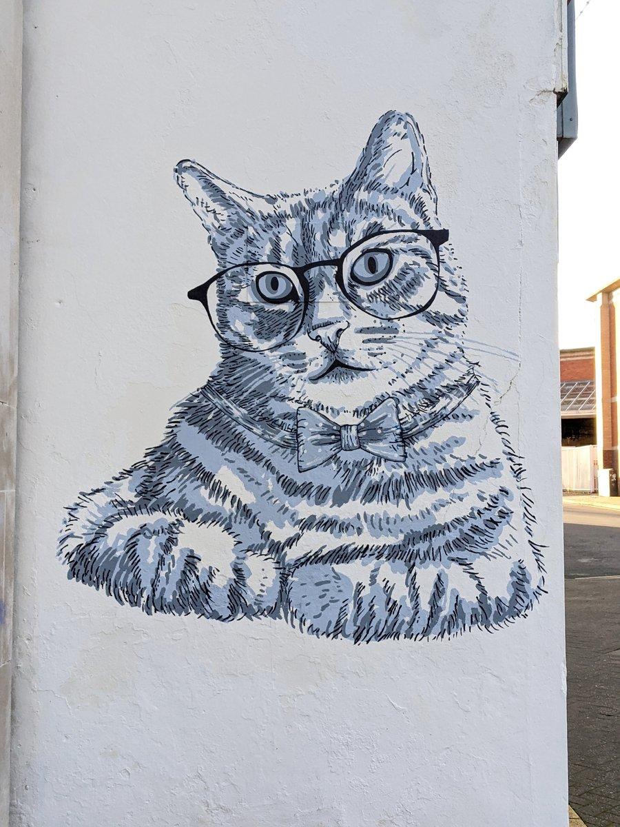 Spectacled Cat (2020)  #Sheffield #StreetArt #SheffieldIsSuper #GraffitiArt #mural #Caturday