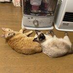 ストーブに近づきたい猫たちと離したい人間の闘い!勝つのは?