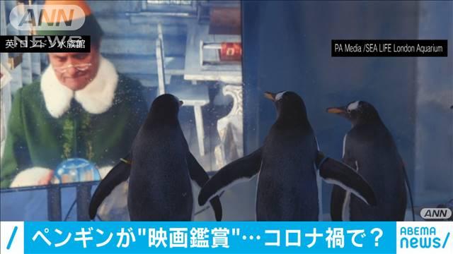 【そわそわ…】都市封鎖で静まり返った水族館のペンギンが映画鑑賞 英人との触れ合いがなくなったペンギンが再開後、多くの客に驚かないよう「人慣れ」させるトレーニングでもあるという。
