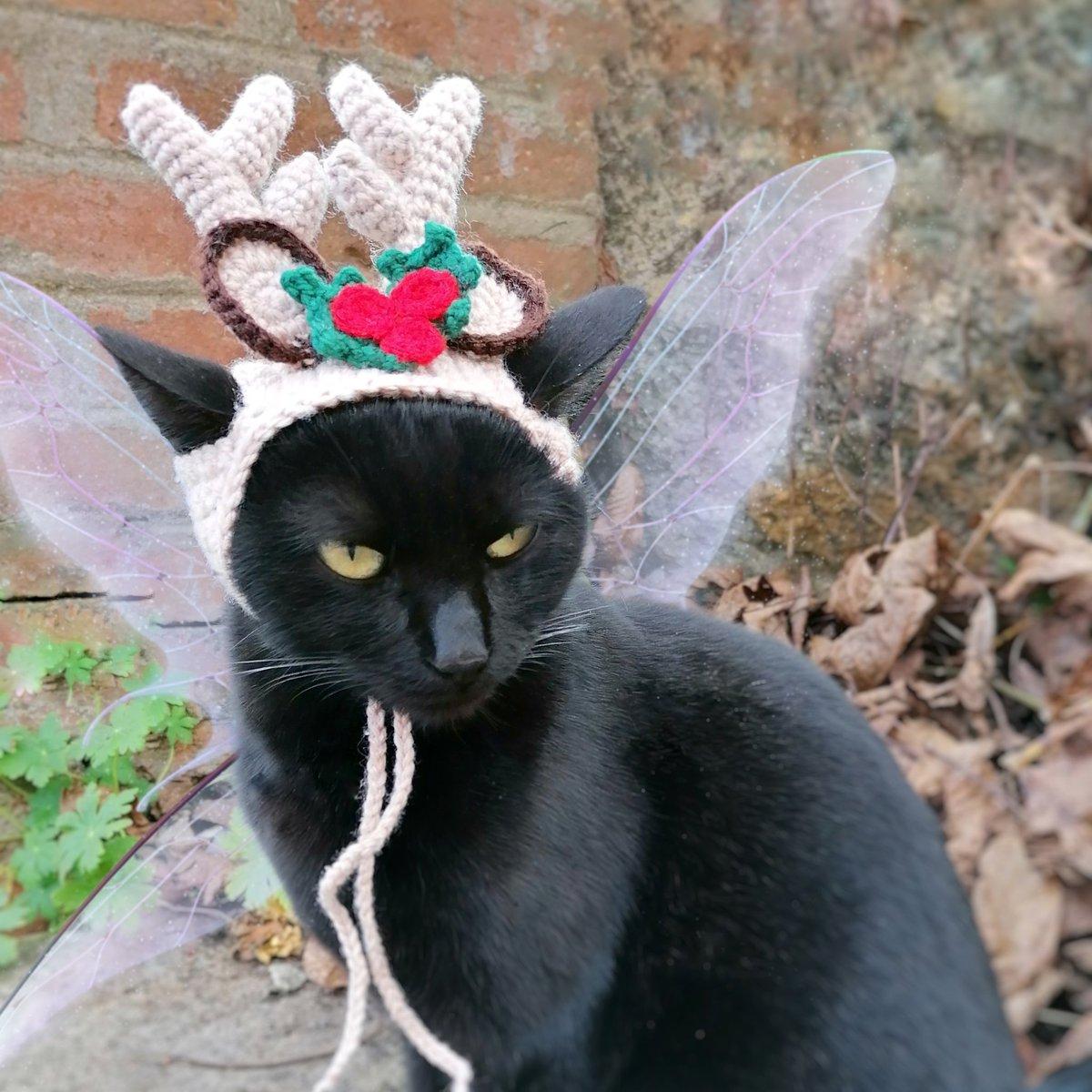 Reindeer cat 🎄 Check out: https://t.co/JmGxYqM9sC #cats #CatsOfTwitter #Caturday #Christmas #ChristmasTree #NewYear #costume #Halloween2020 #dogsoftwitter #CuteCats #cutenessOVERLOAD #funniest #catsincostume2020 #costume #BlackCat #BlackCatsDay https://t.co/VlGMmuJmZb