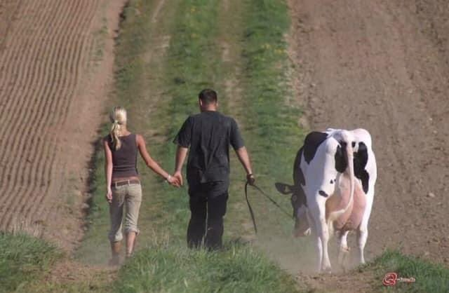 hear me out, you, me & our cow out on a walk