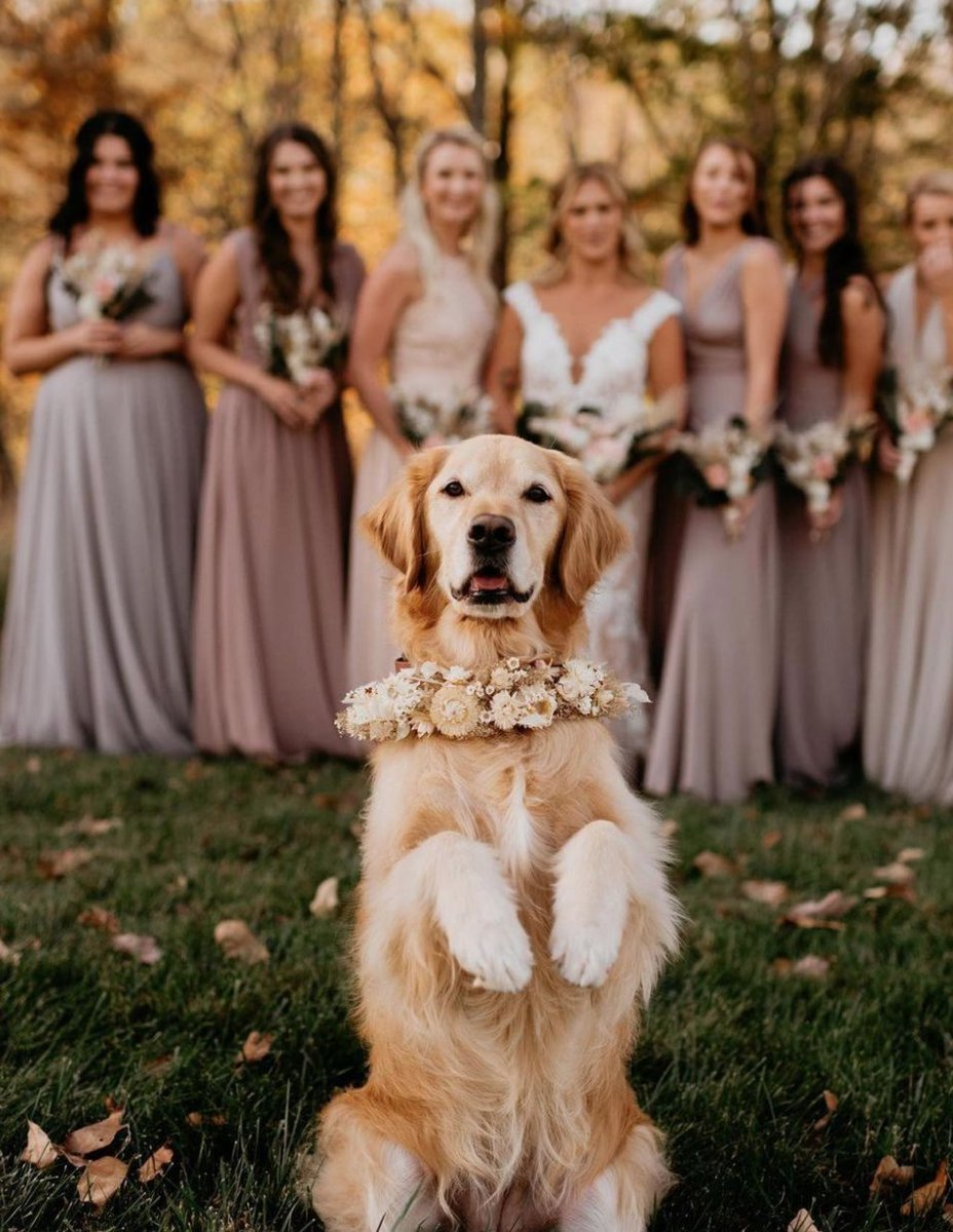 Sevimli minik dostlarımızı kadraja dahil etmek 😌 #wedding #dreamon #bride #bridal #married #engagement #rose #davetiye #marriageproposal @dreamonbridals