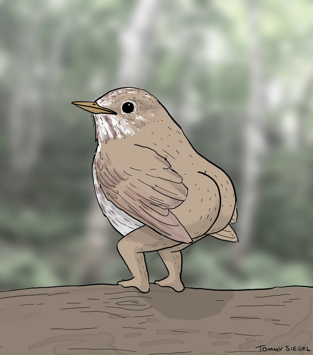 ok so i got some constructive criticism from my first attempt at drawing birds. many people said the legs weren't realistic enough, i think i finally got it though, lemme know what you think https://t.co/kcX6hVTMei