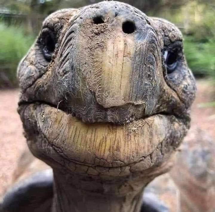 Meet Jonathan, oldest known living terrestrial animal in the world. Came to life in 1832 & currently 188 years old. He has lived through WW1 & WW2, Russian Revolution, saw seven monarchs on British throne, and 39 US presidents. Face says 'everything will pass' including #Corona.