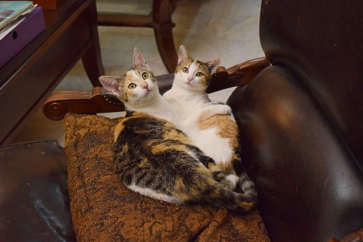 Σήμερα ακυρώθηκε η υιοθεσία της Lennya γιατί η οικογένεια βρήκε ένα άλλο γατάκι στο δρόμο. Έχουμε λοιπόν μια ακόμη ευκαιρία να δοκιμάσουμε να βρούμε ένα σπίτι που θα μπορούσαν να πάνε μαζί. Lennya και Nτη, αδερφές, μόνιμα αγκαλιά, ζητάνε τη δική τους οικογένεια. 6944188658/DM