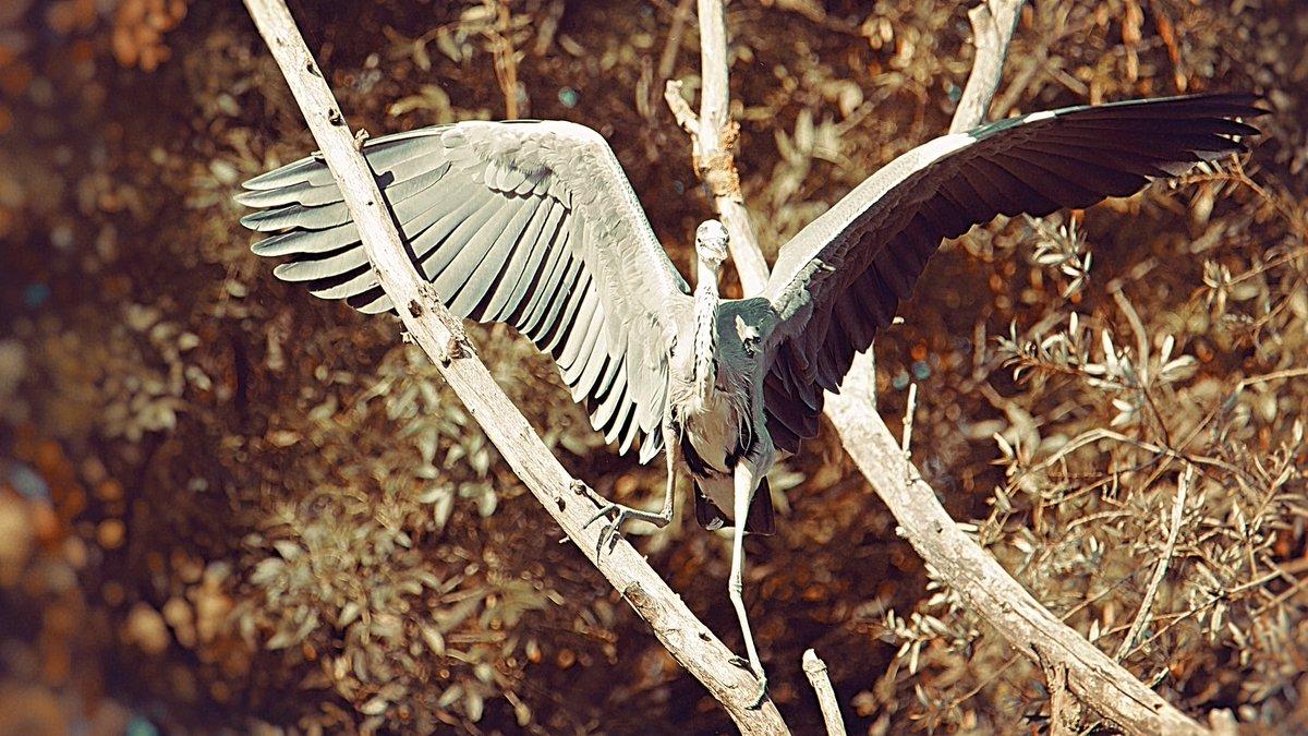 #wildphotography #animals #photography #naturelover #naturephotography #animalphotography #respectanimals #saveanimals #safari #safariphotography #barcelonaspain #photoshoot #nationalpark #nationalgeographic_panorama #photooftheday #canon1dxmarkii #naturephotography #bestoftheday