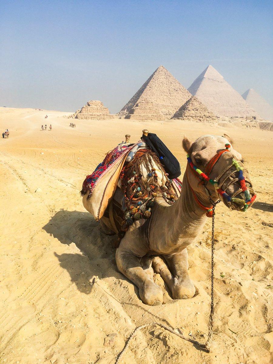 Happy hump day! 🐪  #egypt #femaleblogger #femalewanderer #travelphotography #travelegypt #visitegypt #gizapyramids #cairo #traveldaily #humpdayvibes #egyptphotography #wanderlust #traveltribe #bucketlist #travel #seetheworld #giza https://t.co/LoAdXH3Pio