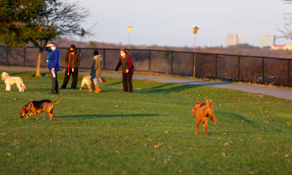 You made it to Wednesday, Boston! Don't forget to take a break and bring the dog for a walk.  #FunFact, the earliest sunsets will be next week. So by Winter Solstice on December 21, we'll actually be getting (a little) more sun back at the end of the day. https://t.co/NCGQKSlFTJ