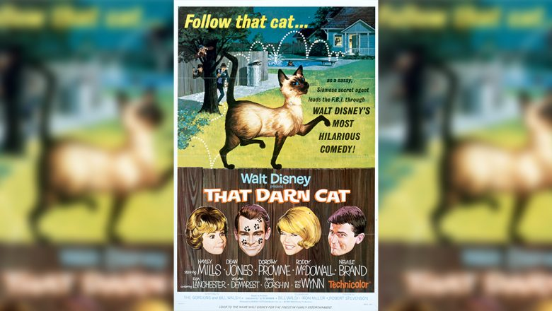 Celebrate 55 years of That Darn Cat with a closer look at the making of the film with some help from @TWDCArchives:  That Darn Cat is now streaming on #DisneyPlus 😺