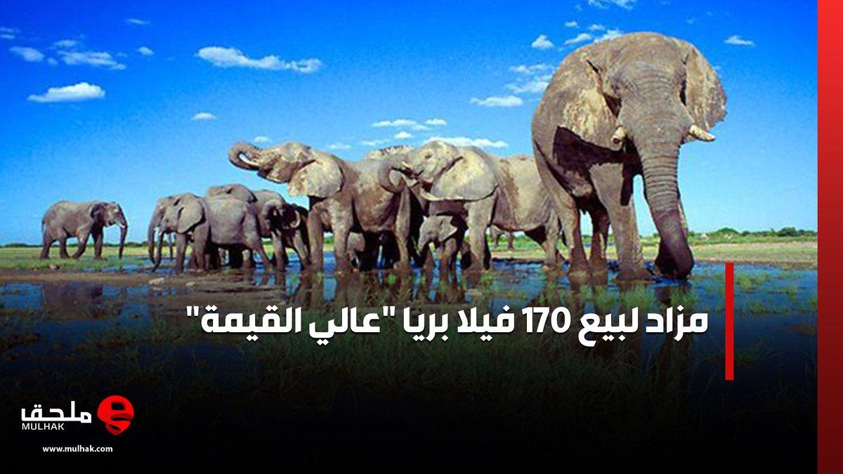 """مزاد لبيع 170 فيلا بريا """"عالي القيمة""""  #ملحق"""