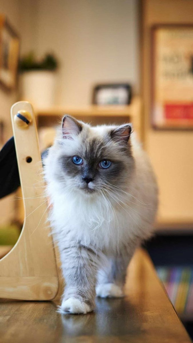 """""""The secret of getting ahead is getting started."""" – Mark Twain  #pets #cats #JOY #JoyOfLife #LifeLessons #fashion #DayoftheGirl #OutDAUGHTERED #lifestyle #fun #Mentalhealth  #Entertainment #CatsOfTwitter #inspirational #success #love"""