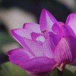 Image for the Tweet beginning: 💜 *・ #YouTube  #劣等感 #真髄 #カンタン #早わかり #Spirituality
