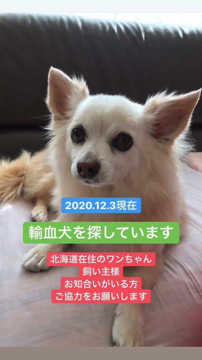センター 動物 総合 医療 志村 坂下