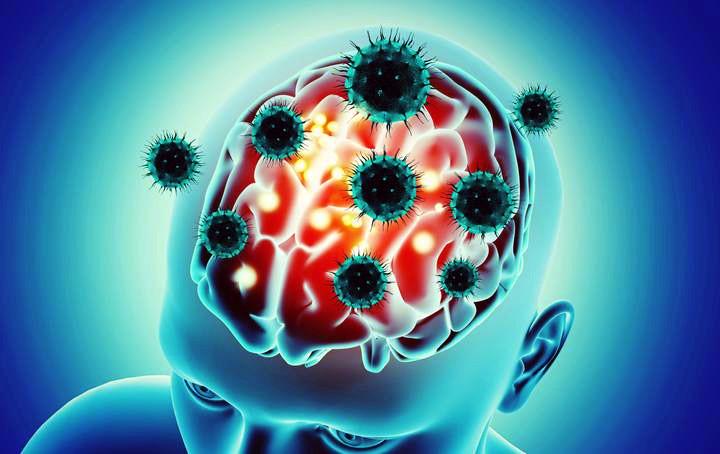 Il virus può entrare nel cervello passando dal naso. I risultati possono aiutare a spiegare alcuni dei sintomi neurologici osservati nei pazienti Covid-19 e possono informare la diagnosi e le misure per prevenire l'infezione. https://t.co/mHnO6Gdpkp https://t.co/bPGUQ71kpS