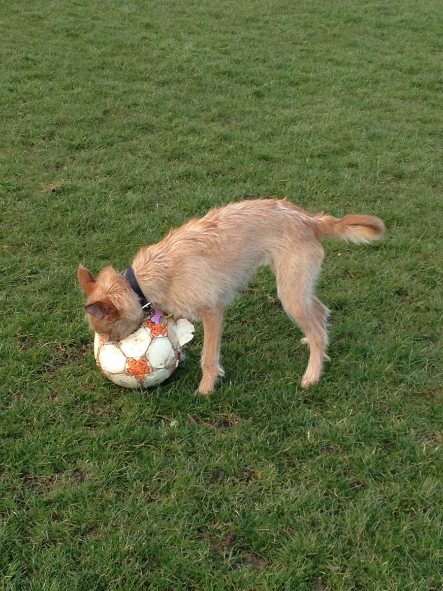Throwback to my first game of football! I wasn't invited back for some reason 🤔 #ThrowbackThursday
