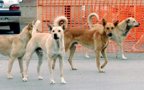 Aumenta a Bagheria l'abbandono di cani, il Comune in campo per salvare i randagi - https://t.co/Q2Isjd8dWk #blogsicilianotizie